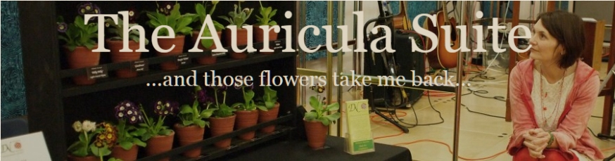 Auricula Suite
