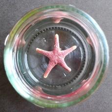 Asa found a tiny starfish