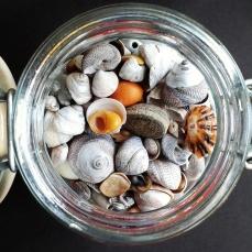 Shiny shells