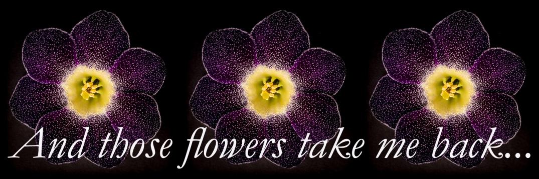 3 flower logo