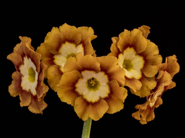 Eden Goldfinch